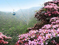 Overlook Beautiful Scenery of Mount Jinfo by Taking Cableway